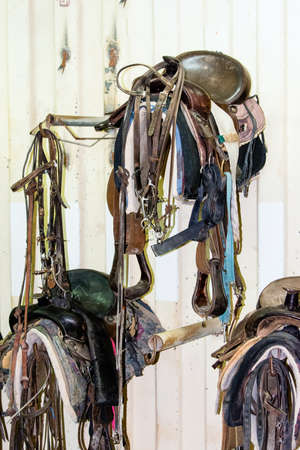 horse harness: Horse harness suspended from a hook on the wall in the stable