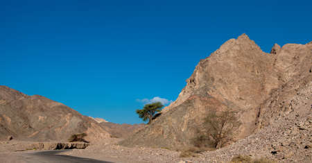 desert sun: Lonely tree grew on the mountain and under the scorching desert sun Stock Photo