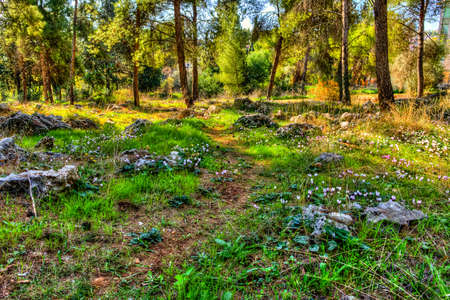 Last autumn flowers blossomed along the paths between pine trees and rocks in the woods