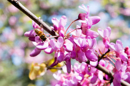 woken: Spring, flowers , delicate petals and smell the flowers attract bees, which have already woken up and started working Stock Photo