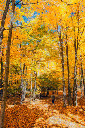 Autumn Forest in its beauty fading and falling of yellow and red leaves gives it a special flavor man went for a walk Stock Photo