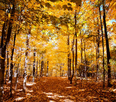 Autumn Forest in its beauty fading and falling of yellow and red leaves gives it a special flavor Stock Photo