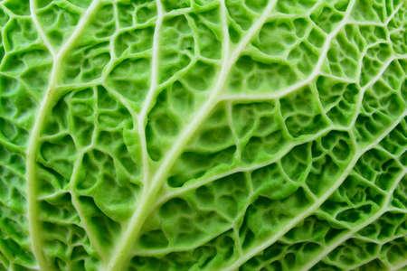 macro: A closeup of a green leaf savoy