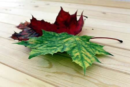 heap: a heap maple leaves in different colors on wood Stock Photo