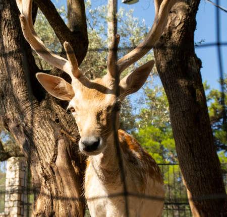 Deer at the zoo.
