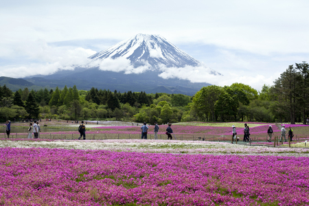 the silence of the world: Purple flowers and Mt.Fuji in japan