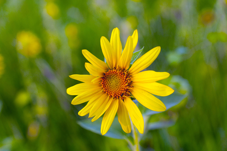 on yellow daisy: yellow daisy flower