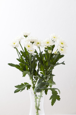 wild silky white: flowers in a vase on white background