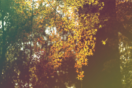 broad leaved tree: autumn park with golden-leaved trees Stock Photo