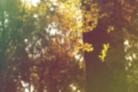 broad leaved tree: blurred image of golden-leaved trees Stock Photo