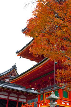 koyo: Kiyomizu-dera temple with colorful red leaves