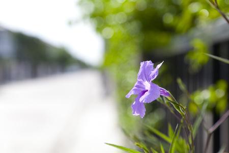 purple flower in the park