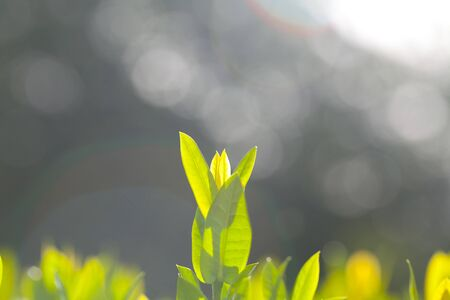 bush to grow up: Green leaves and sun light