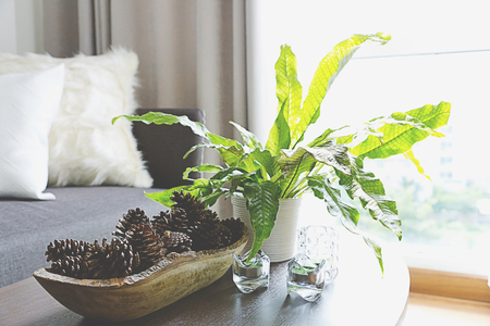 Green plants decorating a room,living room Stock Photo