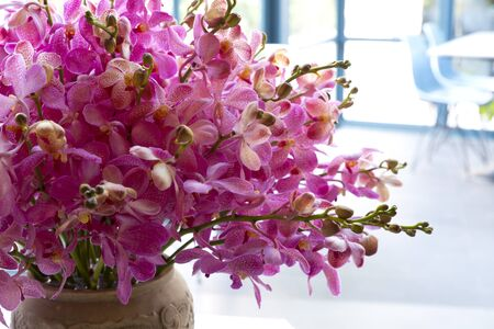 Beautiful Orchid Flower In A Vase Stock Photo Picture And Royalty