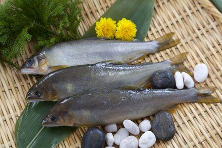 An Image of Ayu fish