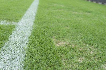 Groen gras in het stadion Stockfoto