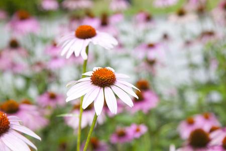 photo of a flower garden