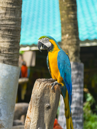 Colorful parrot stand on the tree.
