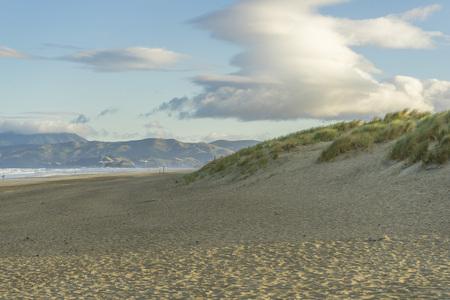 Beautiful green grasses and sand dune at Ocean Beach in San Francisco,CA Фото со стока - 116348296