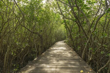 Wood passage way into mangrove forest