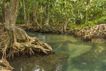 Pristine and tranquil mangrove swamp of Tha Pom Khlong Song Nam in Krabi, Thailand Stock Photo - 128686652
