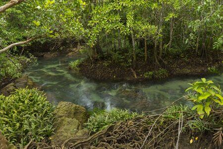 Pristine and tranquil mangrove swamp of Tha Pom Khlong Song Nam in Krabi, Thailand Stok Fotoğraf
