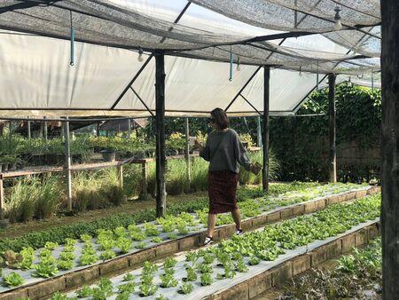 Woman walking in Organic farm in Chiang Mai, Thailand Stock Photo