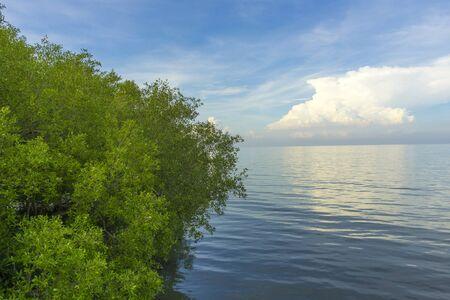 fertile mangrove forest at Laem Phak Bia,Thailand.