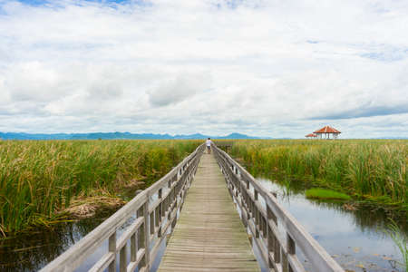 Beautiful view of Wooden Bridge on lotus lake at Khao Sam Roi Yod National Park, Thailand.