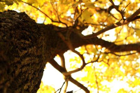 autum: Autum tree