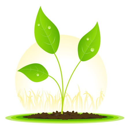 planting: Illustration of a plant of flower seed with leaf growing among grass.