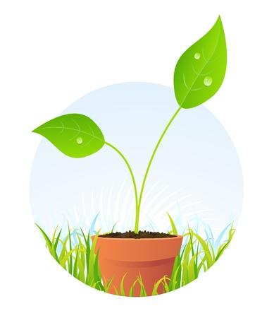rising of sun: Ilustración de una semilla de planta joven antes de que se convertirá en flor hermosa Vectores