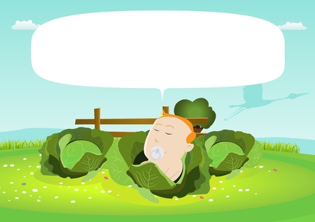 Illustration of a cute baby born in a cabbage Vector