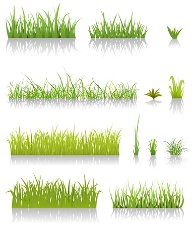 fields  grass: Illustration of a set of various green blades of grassand other thin leaves for spring or summer time