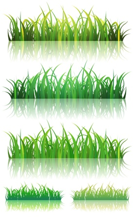 Illustration of a set of thin leaves and glossy green grass background with reflection on the ground, for summer or spring season  イラスト・ベクター素材