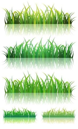marsh plant: Illustrazione di un insieme di foglie sottili e lucide sfondo verde erba con la riflessione sul terreno, per l'estate o primavera Vettoriali