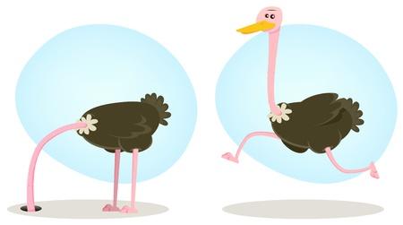 avestruz: Ilustración de un personaje de dibujos animados divertido ave avestruz africano de sabana, enterrando la cabeza en el suelo Vectores