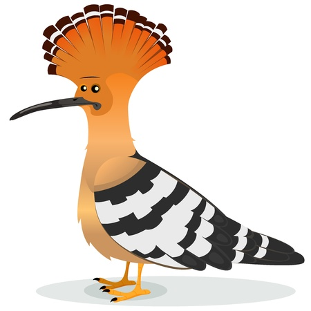 Illustration of a cartoon funny elegant hoopoe bird male character, real famous country species with orange, white and black feather and its famous crest and long thin beak