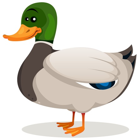 duck: Illustration of a cartoon mallard duck with green neck and grey feather with beautiful blue shades