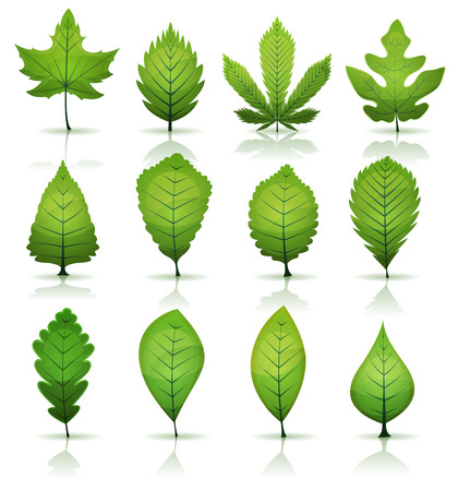 Illustration of a set of spring or summer season green leaves, from various plants and trees species