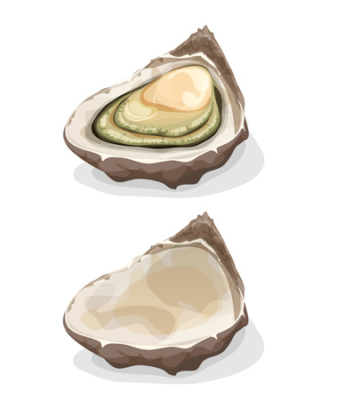 oyster shell: Illustration of a cartoon appetizing fresh and raw oyster shell, full and empty