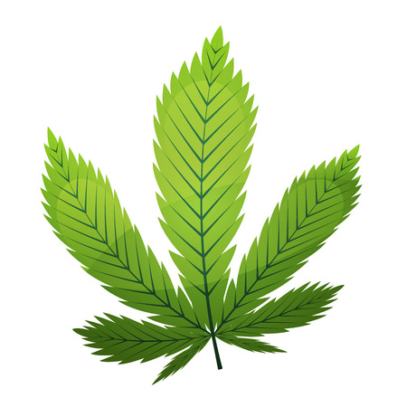 Illustration of a green cannabis leaf from marijuana plant