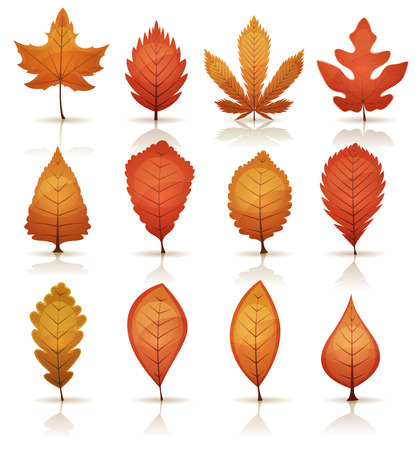 Illustration of a set of autumn and fall season orange, red and yellow leaves, from various plants and trees species.