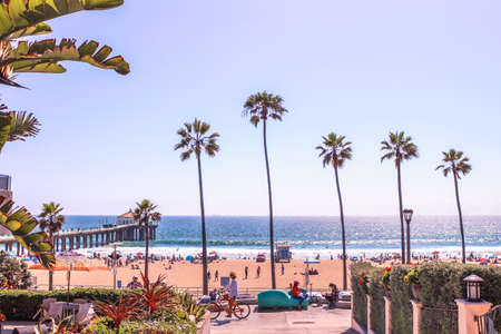 Palm trees in Manhattan Beach
