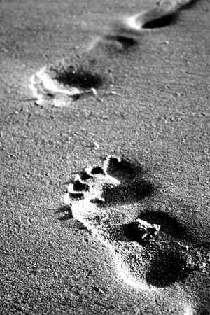 Black and white footsteps in the sand