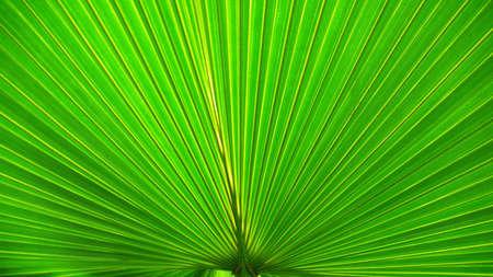 chlorophyll: Palm Leaf