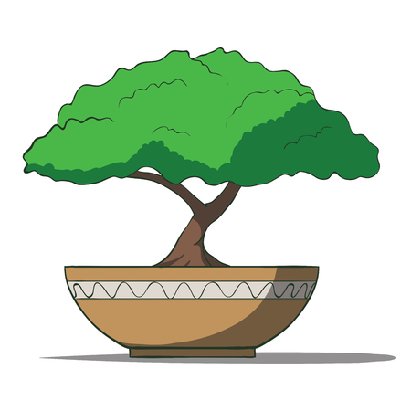 Vector Illustration of colorful bonsai tree isolated on white background Vector
