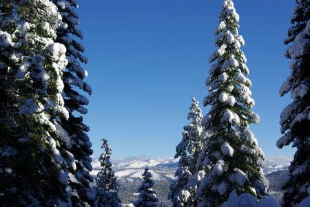 sierra snow: Sierra view through snow covered trees Stock Photo