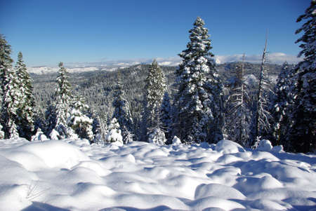 sierra snow: Snow covered Sierra forest Stock Photo